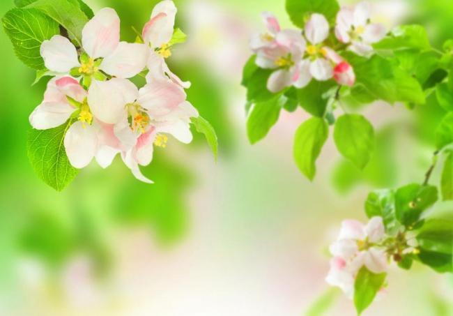 描写春天的诗句有哪些