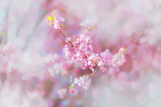 关于赞美春天的诗句