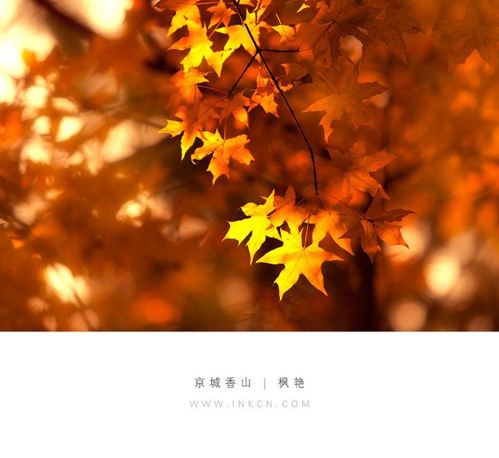 【释义】 立秋,是二十四节气中的第13个节气,每年8月8日或9日立秋。 秋就是指暑去凉来,意味着秋天的开始。到了立秋,梧桐树必定开始落叶,因此才有落一叶而知秋的成语。从文字角度来看,秋字由禾与火字组成,是禾谷成熟的意思。立秋是秋季的第一个节气,而秋季又是由热转凉,再由凉转寒的过渡性季节。