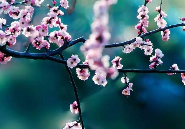 关于梅花的古诗词图片