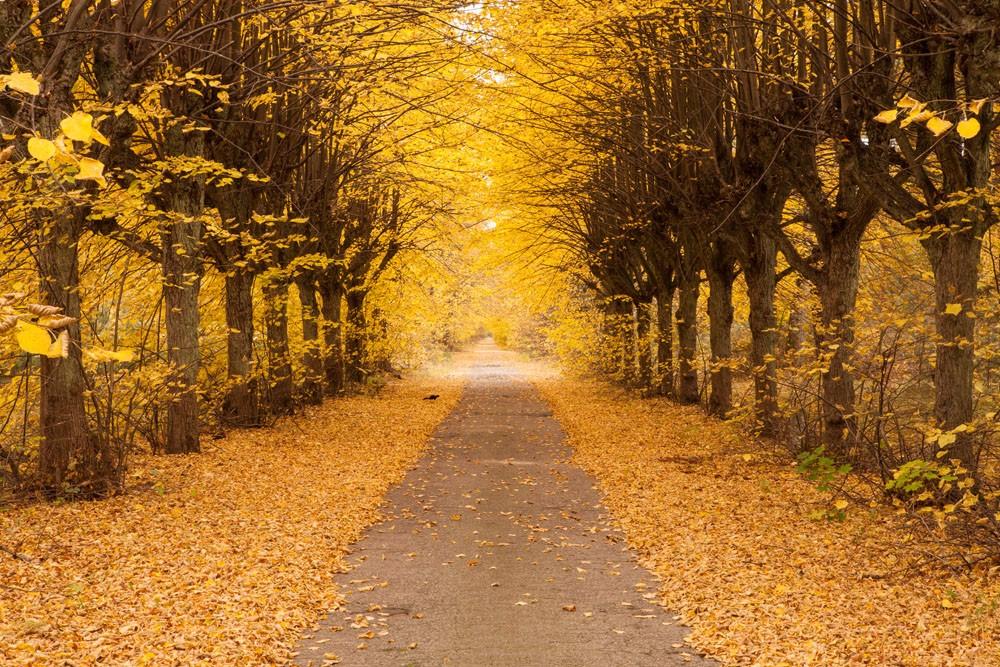 >> 描写秋天的优美句子  仿写一段描写秋天景物的文字答:1,枫树叶子此