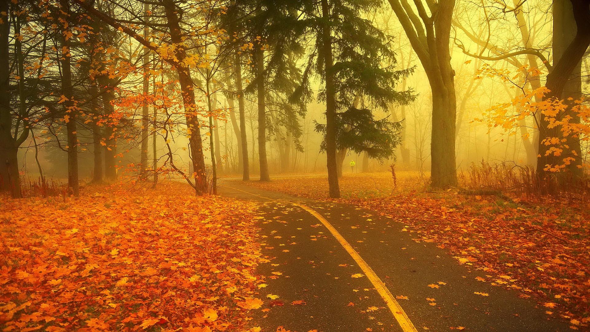 >> 描写秋天的句子和段落  仿写一段描写秋天景物的文字答:1,枫树叶子