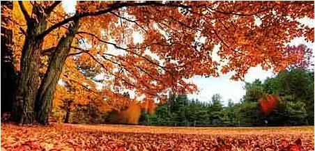 关于秋天的句子和词语