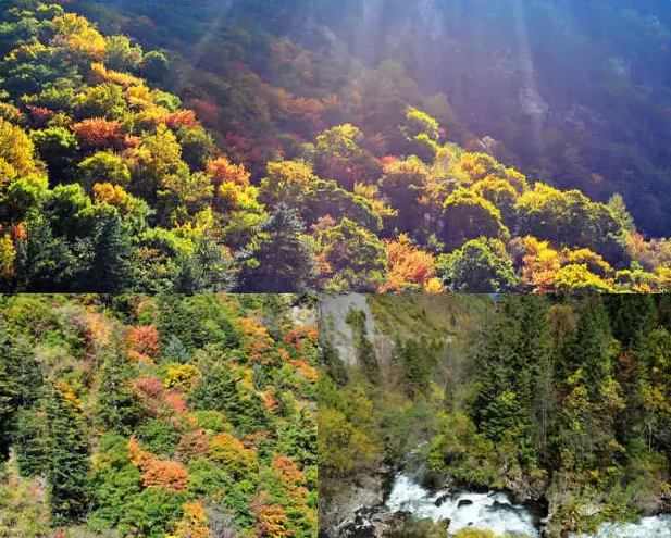 关于赞美秋天的诗句