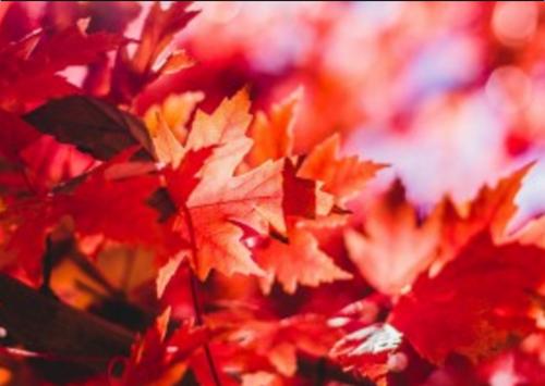 关于秋天的诗句三年级_秋天的诗句汇总