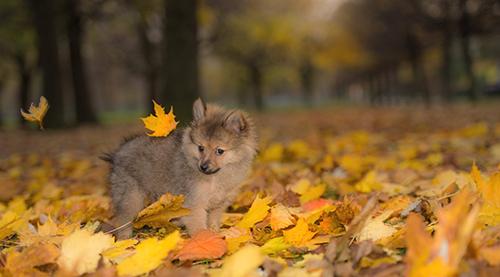 秋天的诗句有哪些_秋天的诗句大全