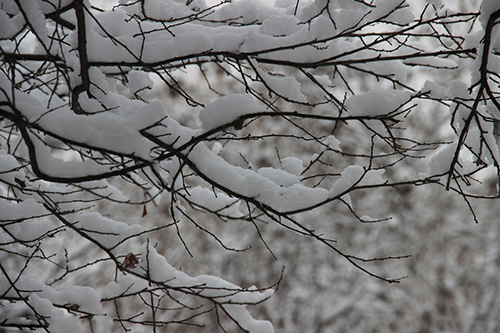 关于冬天的诗句_冬天的诗句汇总