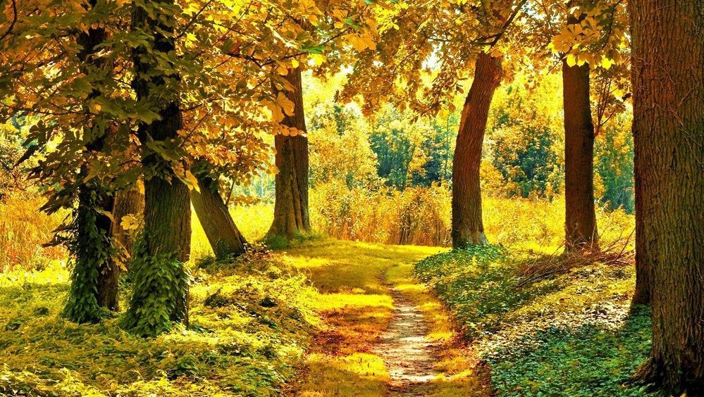 描写秋天伤感的句子   1、这个秋天有很多的冰冷,这个秋夜满眼是红树,满眼寂寂,又听得清角吹寒,呜呜咽咽,空空荡荡,端的是素秋难敌,风雨愁煞人,不如怀念。   2、在这个深秋,我看到的是秋天的多变:既看到了秋天的收获,又看到了秋天的无奈,也看到了秋天的迷惘,更多的是看到秋天的伤感   3、那个秋天,也是秋风起,也是落叶黄,落叶在树的身边随风盘旋,带着一丝的无奈、一丝的落寂、一丝的不舍,低低的吟唱着离别的歌,和那棵她曾经深爱过的大树告别。   4、秋风瑟瑟,树叶零乱,凄凉片片,到处弥漫,心也随着欲发