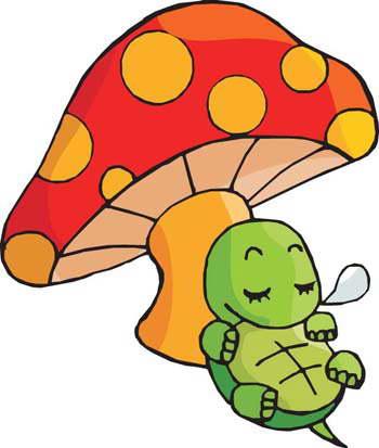 小乌龟注意事项