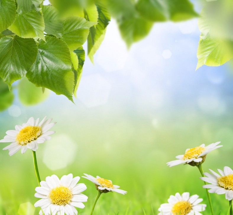 赞美春天的诗句