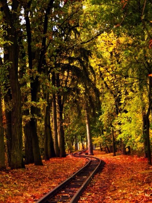 欣赏树林风景的句子