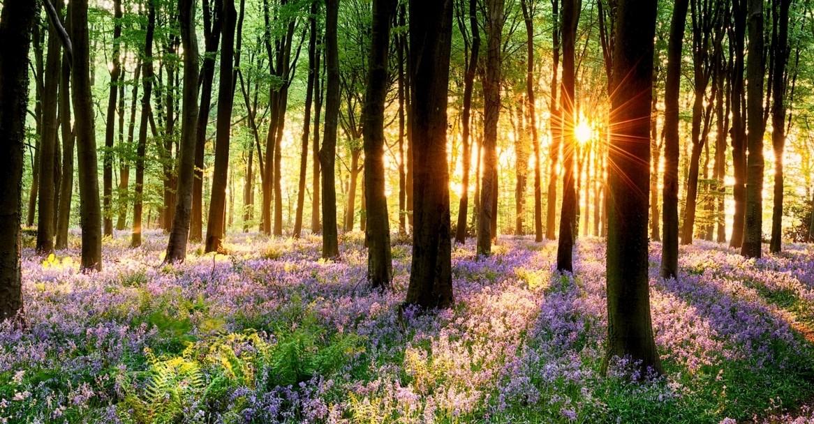 描写春天的诗句一句话