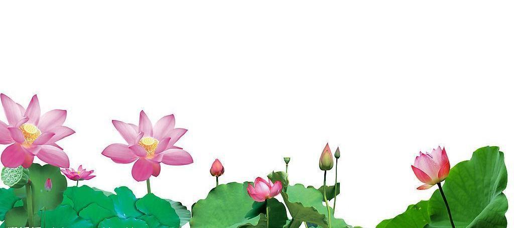 植物简笔画 荷花带带颜色