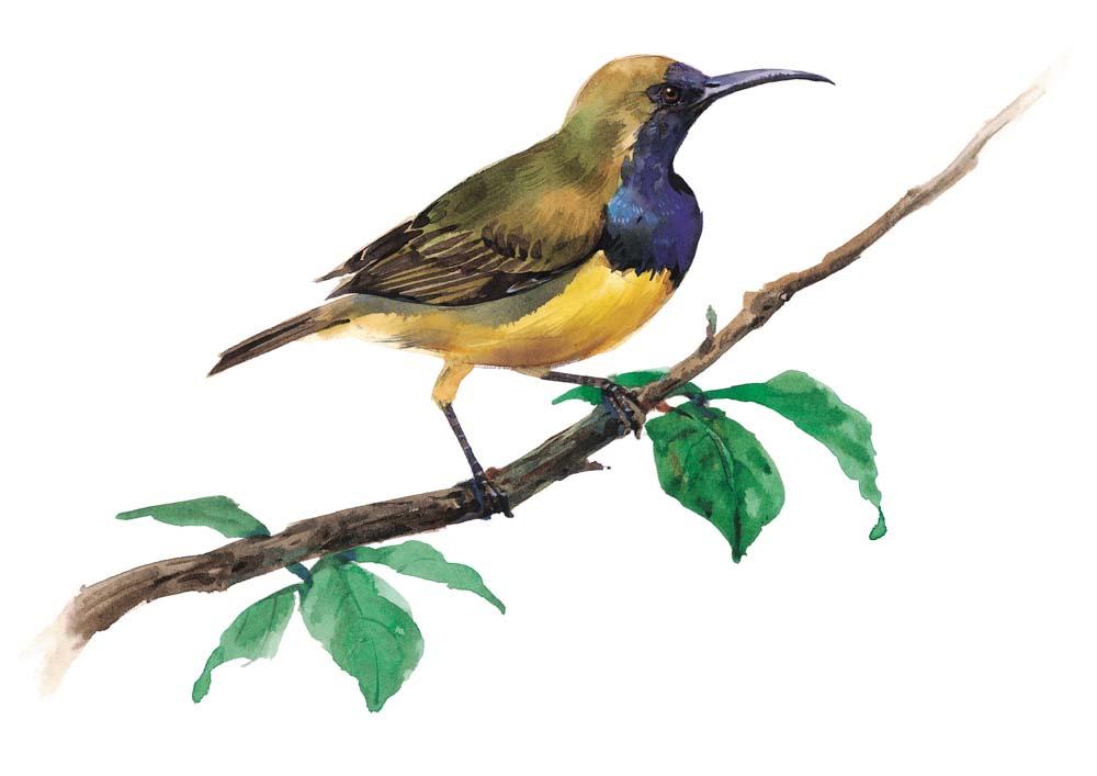 春天的鸟的诗句
