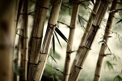 古风竹林-赞美竹子的诗句图片