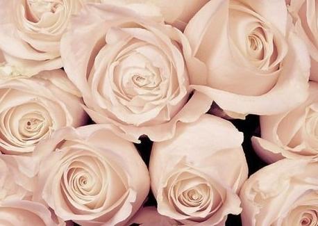 白色情人节是如何送花