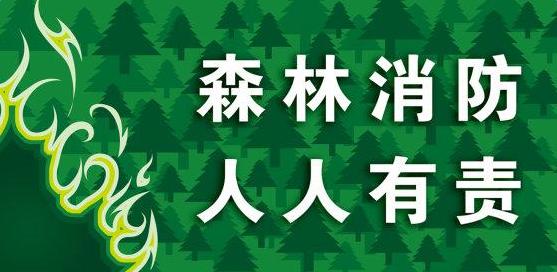 2017小学森林防火标语