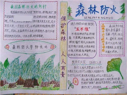 2017森林防火手抄报100字
