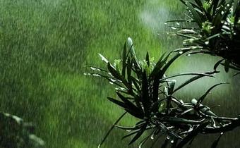 描写春雨的诗句