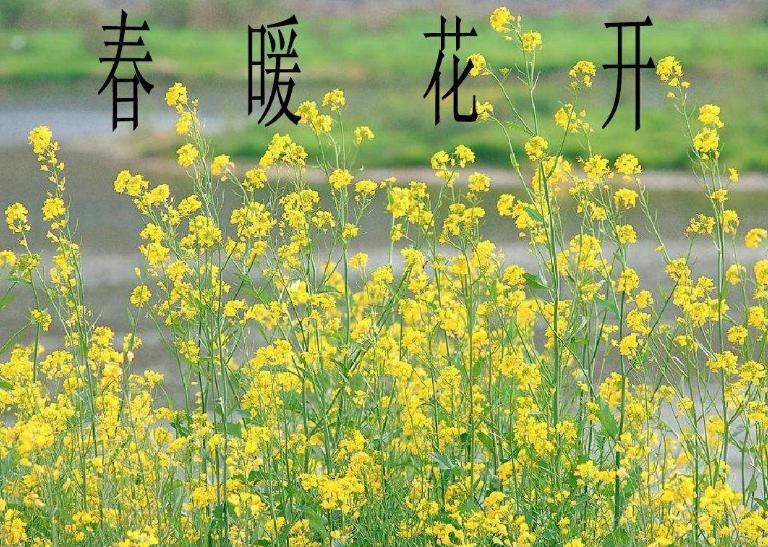 描写春天的句子_描写春天的优美语句