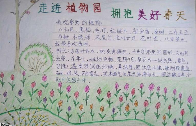 植物园手抄报_参观植物园日记图片