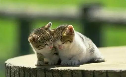 解夢夢見貓是什么意思_夢見貓有什么寓意_各種人夢見貓的意思