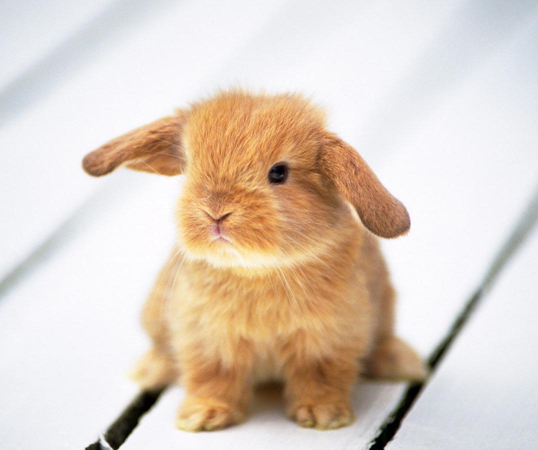 兔子常见疾病预防与治疗