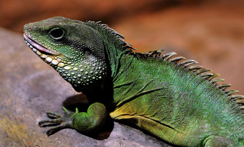 爬行动物(或称爬行类,爬虫类)是一类脊椎动物,属于四足总纲的羊膜动
