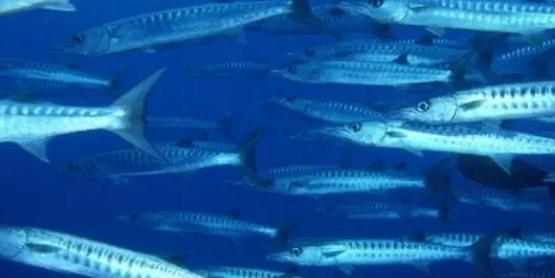 深海鱼有哪些?深海鱼对人体有哪些好处?