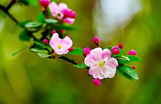 flowers是什么意思_单词flowers是什么意思