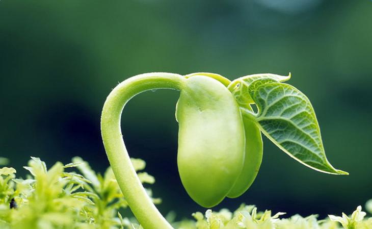 嫩芽是什么意思_嫩芽的意思及造句