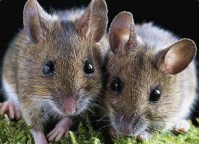 关于鼠的成语_带鼠字的成语大全