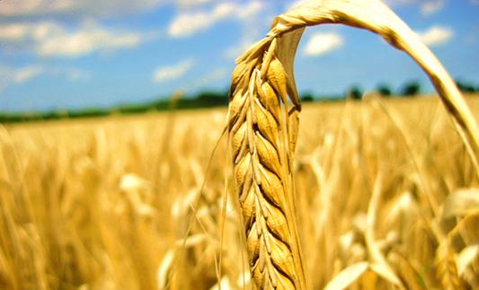 13个粮食主产省份开展农业大灾保险试点