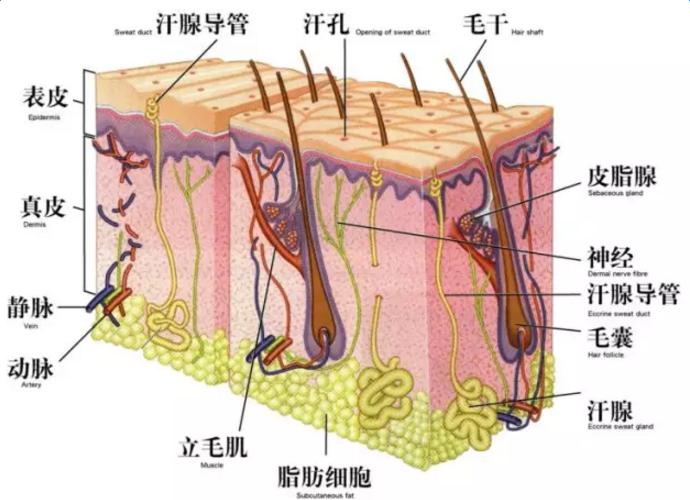斑是怎样形成的 形成斑的原因
